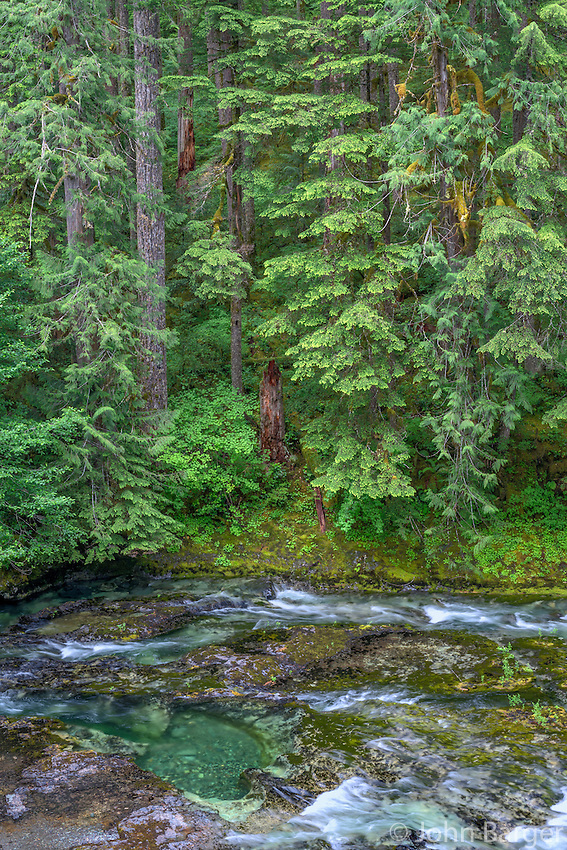 ORCAN_D136 - USA, Oregon, Willamette National Forest, Opal Creek Scenic Recreation Area, Little North Santiam River with surrounding lush coniferous forest in spring.