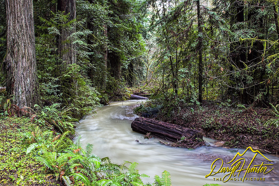 Stream in the Humboldt Redwoods of Northern California.