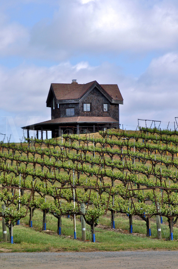 A dark two story shingled house situated in the middle of a vineyard in West Sonoma County California