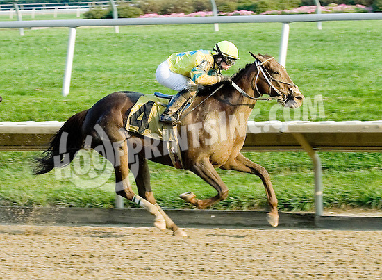 One Hot Toddy winning at Delaware Park on 10/12/10