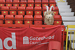 Gateshead 1 Cambridge United 1, 17/09/2011. Gateshead International Stadium, Football Conference. The head of the home team's mascot resting on a seat in the main stand at the Gateshead International Stadium, the athletics stadium which is also the home ground of Gateshead FC, on the day the club played host to Cambridge United in a Blue Square Bet Premier division fixture. The match ended in a one-all draw, watched by a crowd of 904. The point meant Gateshead went to the top of the division, one below the Football League in England. Photo by Colin McPherson.