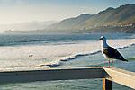 San Luis Obispo / Pismo Beach Area