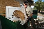Mountain Lion (Puma concolor) biologist, Sean McCain, removing road-killed Black-tailed Deer (Odocoileus hemionus) to bait lions, Santa Cruz Puma Project, Santa Cruz Mountains, California