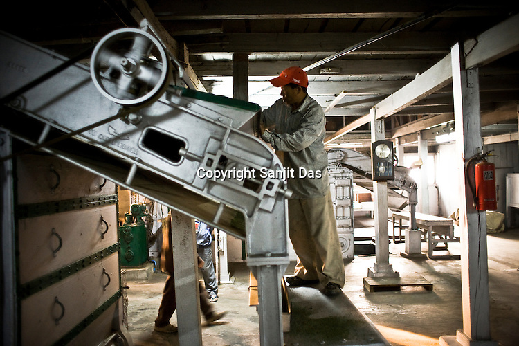 Factory worker, Rajkumar is seen spreading the tea leaves during the process of tea drying at Makaibari Tea Estate factory, Kurseong in Darjeeling, India.