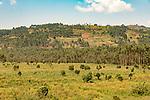 Ugandan Scenic