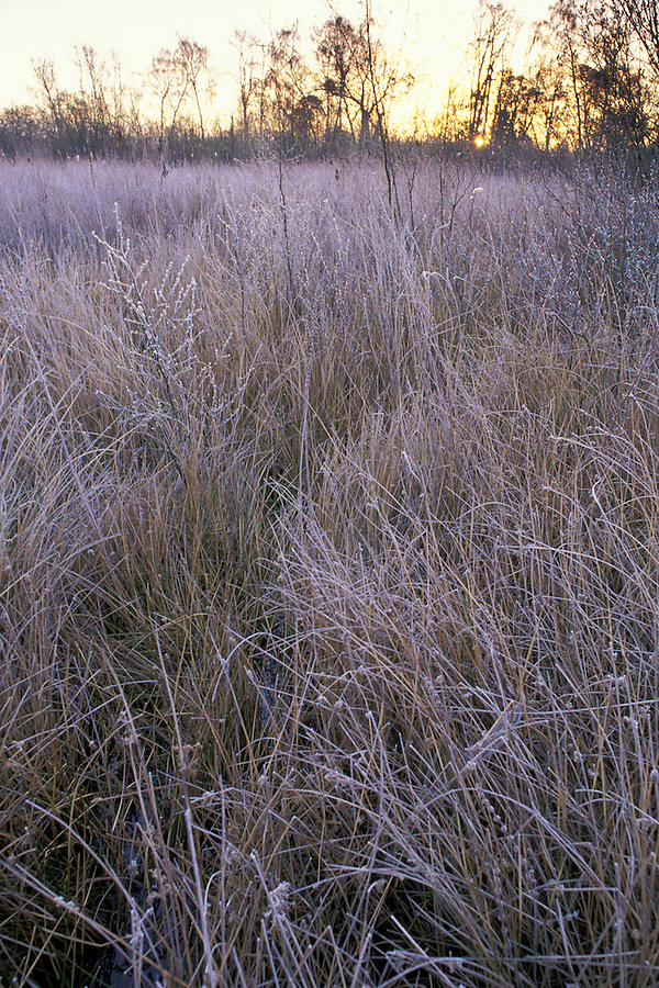 Marsh at University of Washington Arboretum, Seattle, Washington