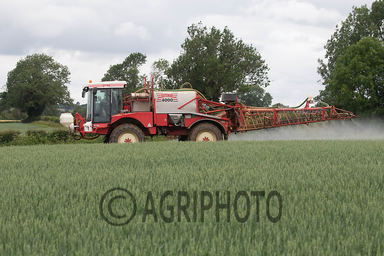 20.6.2020 Spraying fungicide at growth stage T3 in wheat<br /> ©Tim Scrivener Photographer 07850 303986<br />      ....Covering Agriculture In The UK.