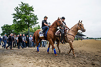 ELMONT, NY - JUNE 07: Justify with Humberto Gomez aboard is ponied to the track by Jimmy Barnes after completing preparations for the 150th Belmont Stakes at Belmont Park on June 07, 2018 in Elmont, New York. (Photo by Alex Evers/Eclipse Sportswire/Getty Images)