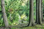 The Muddy River in The Back Bay Fens, Boston, Massachusetts, USA