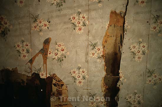 Old wallpaper in abandoned house.<br />