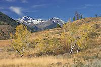 Mt. Gardner & aspens in autumn, Washington