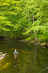 Hammonasset River at Killingworth, CT. Fly- fishing.