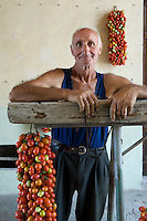 Portrait of farmer Ponsiello Giovanni with freshly harvested pomodorino piennolo del Vesuvio tomatoes