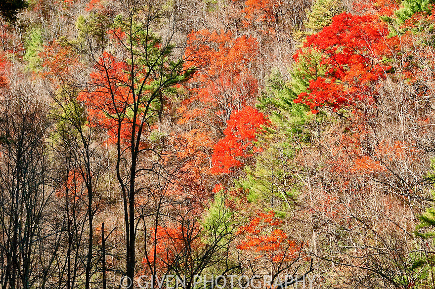 Autumn, Hardwood Forest, Great Smoky Mountains National Park, Tennessee