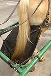 Old Galveston, Texas  Strand Square area.manure bag on carriage horse