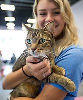 NWA Democrat-Gazette/BEN GOFF @NWABENGOFF<br /> Heather Mahony, a student at the University of Arkansas, pets Tony Saturday, Oct. 5, 2019, at Purr Catfe in Fayetteville. The non-profit is open for 'Purr Therapy' visits and all the cats are available for adoption.
