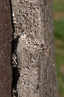 cork oak bark herdade de sao miguel alentejo portugal