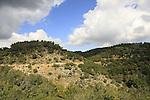Israel, Mount Carmel, Carmel Scenic Road