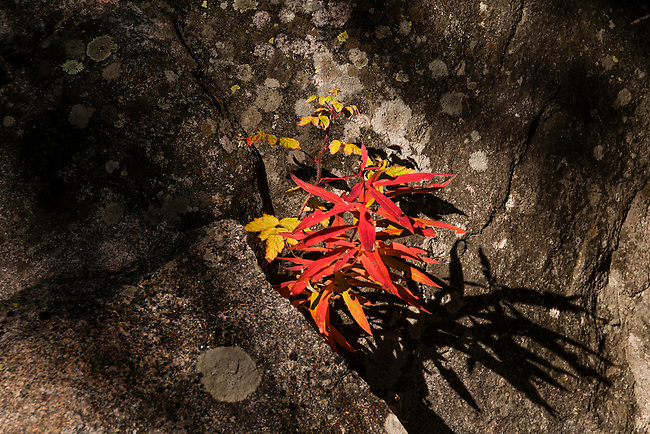 fall, color, foliage, boulder, lichen, shadow, nature, abstract, September, morning, Rocky Mountain National Park, Colorado, Rocky Mountains, USA