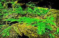 Intimage landscape of fern and stone and rocks in NC mountains