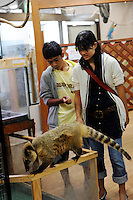 A Lesser Anteater for sale at the Noah Inner City Zoo - a pet shop that sells exotic animals. The 'zoo' claims to have more than 300 species for sale, many are exotic and rare animals - some endangered.