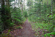 North Twin Trail in Bethlehem, New Hampshire USA during the spring months. Parts of this trail follow the old Little River Railroad bed, which was a logging railroad owned by George Van Dyke and was in operation from 1893 - 1900.