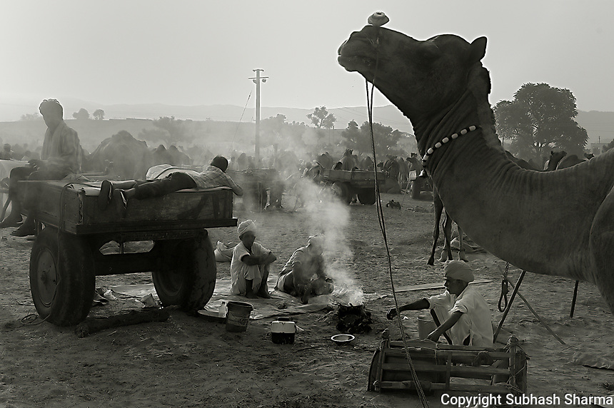 Pushkar Cattle fair,Pushkar,India