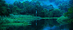 En el anochecer / anochecer en el bosque lluvioso tropical del Parque Nacional Camino de Cruces, Panamá.<br />