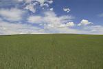 Wheat and cloudscape near Boulder, Colorado, USA.
