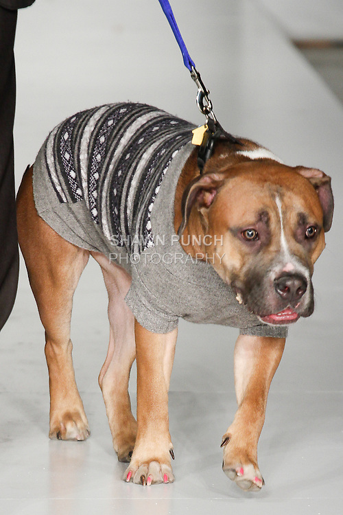 Dog walks down runway in an outfit  from the My Fabulous Puppy collection by Warren R. Agee, during Fashion Week Brooklyn Fall Winter 2014, Day 1 at Industry City, on March 13, 2014.