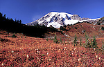 Mt. Rainier seen from Paradise Meadow over fall foliage.