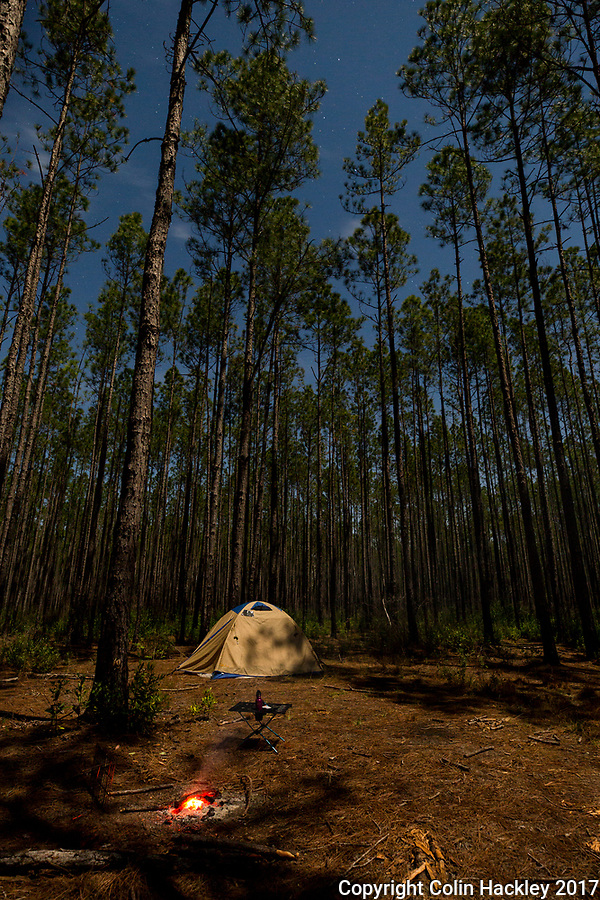 SOPCHOPPY, FLA. 3/10/17-Moonlight illuminates a campsite  the pines of the Apalachicola National Forest as the stars shine above the Sopchoppy, Fla. area.<br /> <br /> <br /> COLIN HACKLEY PHOTO