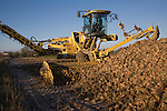 Ropa euro maus 4 sugar beet loader machine in operation, Shottisham, Suffolk, England