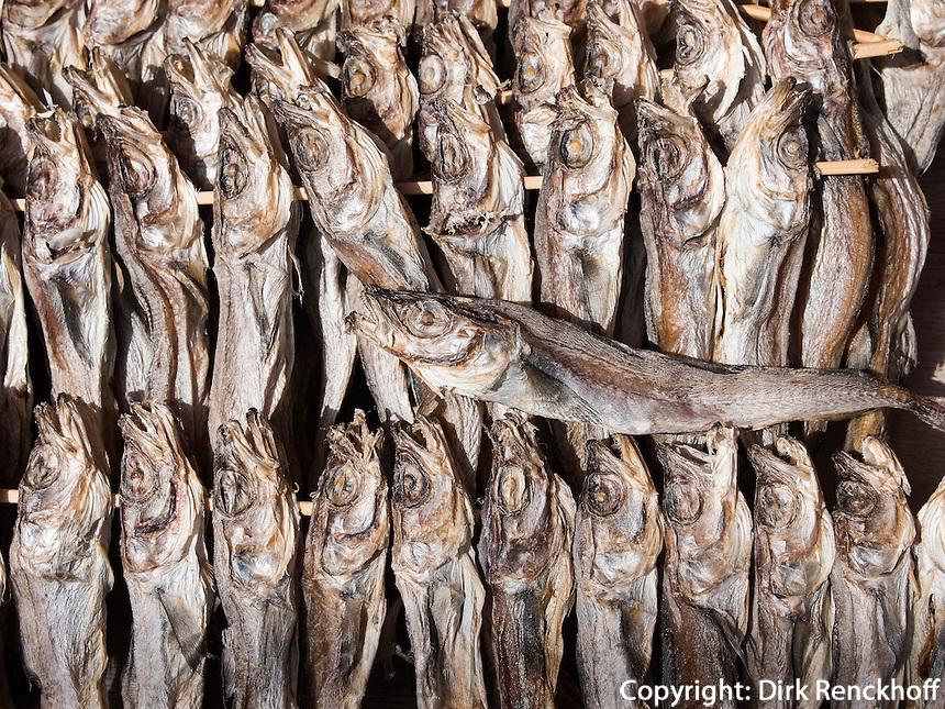 Trockenfisch am Hafen von Sokcho, Provinz Gangwon, S&uuml;dkorea, Asien<br /> drying fish, port of  Sokcho, province Gangwon, South Korea, Asia
