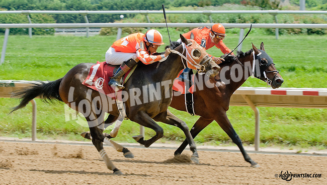 Out to Flank You winning at Delaware Park on 6/17/13