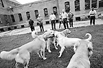 BEACON, NEW YORK:  The puppies are given a chance to play in a prison courtyard at Fishkill Correctional Facility. The dogs are in The Puppies Behind Bar (PPB) program which works with prison inmates in New York, New Jersey, and Connecticut to train service dogs, including ones who help injured soldiers and those suffering from post-traumatic stress. Fishkill Correctional Facility is a medium security prison in New York with 22 men in the puppy program.