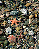 Tide pool along the shore of the Pacific Ocean; Highway 1, CA