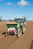 Planting Orchestra potatoes with a Miedema Structural two row planter - Norfolk, April