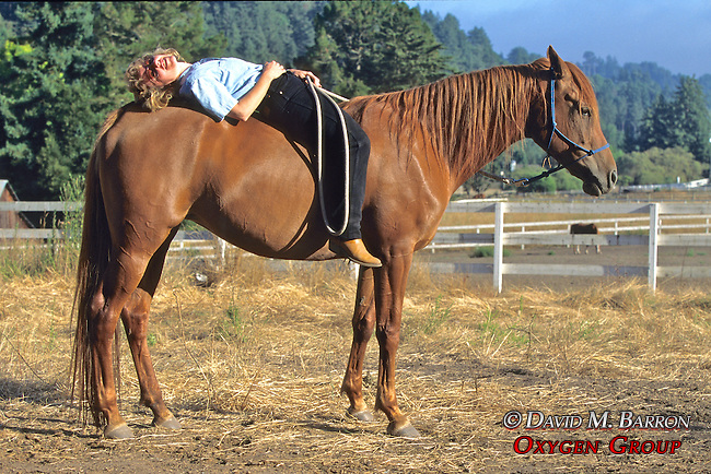 Evelyn Hanggi Working Horse