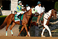 "October 07, 2018 : #3 Fuhriously Kissed and jockey Jose Bracho in the 63rd running of The Juddmonte Spinster (Grade 1) $500,000 ""Win and You're In Breeders' Cup Distaff Division"" at Keeneland Race Course on October 07, 2018 in Lexington, KY.  Candice Chavez/ESW/CSM"