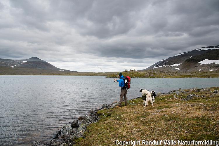 Mann med to hunder fisker i vann på Laksefjordvidda. Rastigaisa i bakgrunnen. ---- Man with two dogs angling.