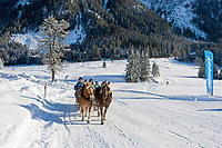 Oesterreich, Salzburger Land, Pongau, bei Obertauern: Pferdeschlittenfahrt im Skilanglaufgebiet rund um die Gnadenalm | Austria, Salzburger Land, Pongau, near Obertauern: sleigh ride through cross-country ski area at Gnadenalm