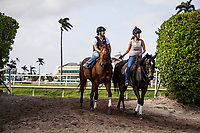 HALLANDALE BEACH, FL - JANUARY 26: Giant Expectations comes off the track after completing preparations for the Pegasus World Cup Invitational at Gulfstream Park Race Track on January 26, 2018 in Hallandale Beach, Florida. (Photo by Alex Evers/Eclipse Sportswire/Getty Images)