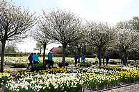 Nederland Limmen 2018. Hortus Bulborum in Limmen. In de tuin staan meer dan 4000 soorten bloemen. De hortus, waarin voornamelijk tulpen en narcissen staan, is in 1928 opgericht. De Hortus Bulborum is een proeftuin, waar nieuwe soorten worden gekweekt.   Foto Berlinda van Dam / Hollandse Hoogte