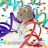 Xavier, ANIMALS, REALISTISCHE TIERE, ANIMALES REALISTICOS, photos+++++,SPCHHAMSTER180,#A#, EVERYDAY ,funny