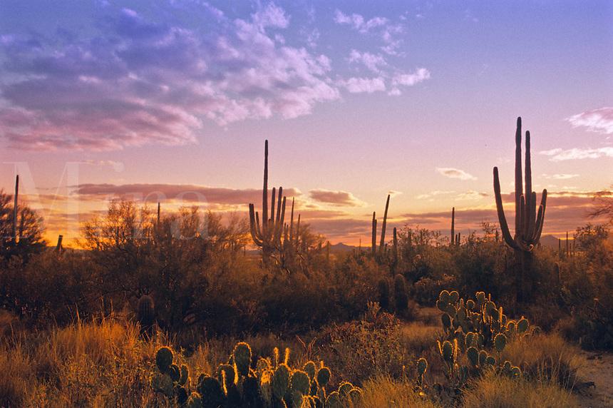 Saguro National Park, Arizona