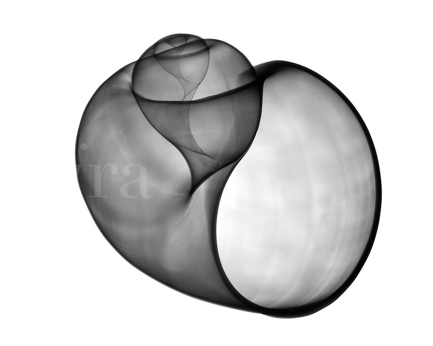 Xray Apple shell