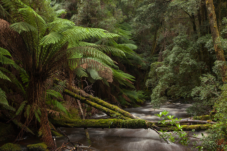 Wild rivers, rainforests, waterfalls, mountains, and plains are found in the Franklin-Gordon Wild Rivers national park