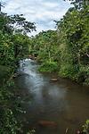 Tropical rainforest along the Iguazu River in  Iguazu National Park in Argentina.  A UNESCO World Heritage SIte.