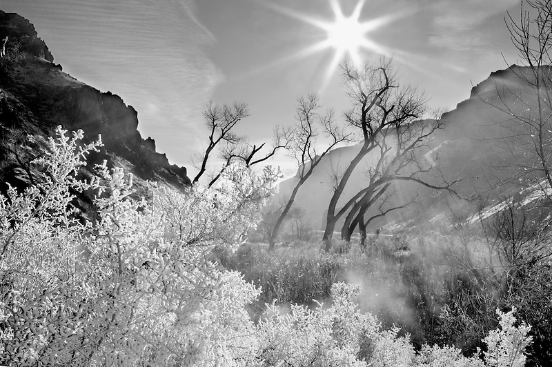 Hoar frost on plants with cottonwood trees with sun. at Snively Hot Spring. Owyhee River. Oregon